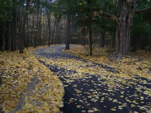 The Town and Country path covered with yellow leaves