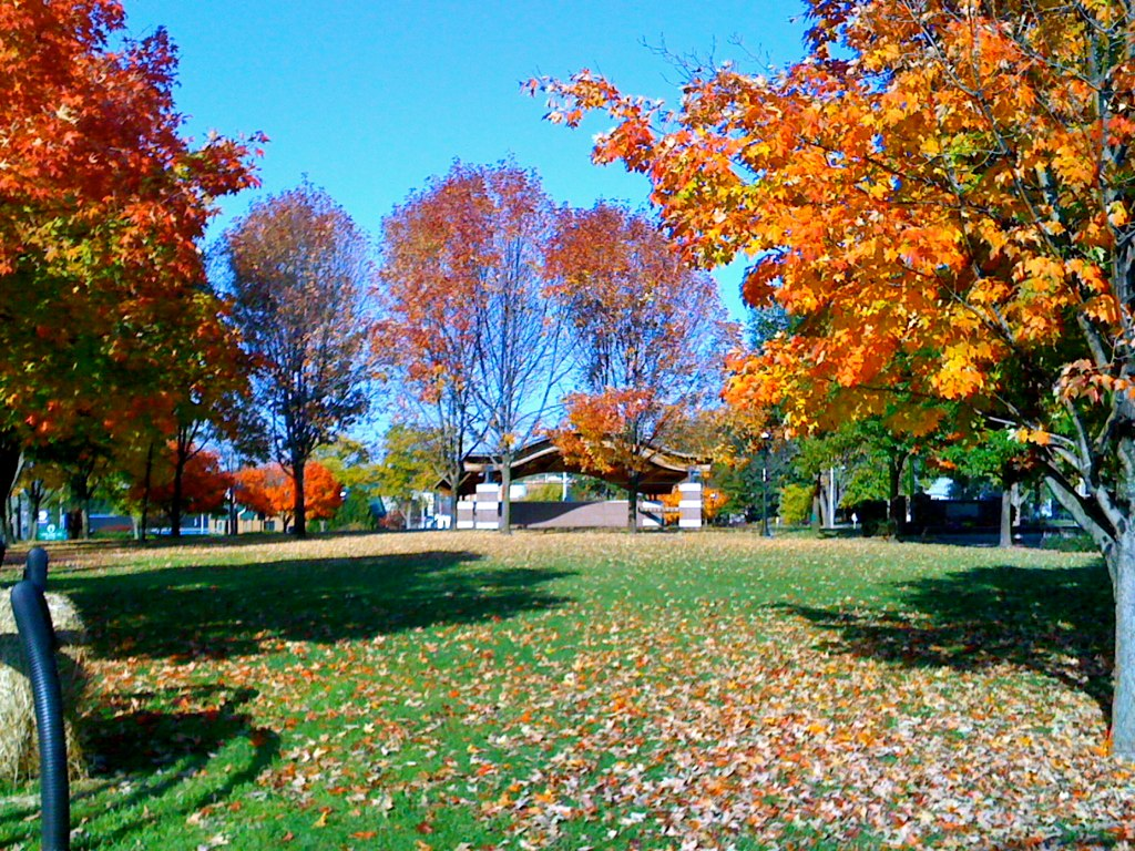 Amphtr Eastview -Fall.jpg